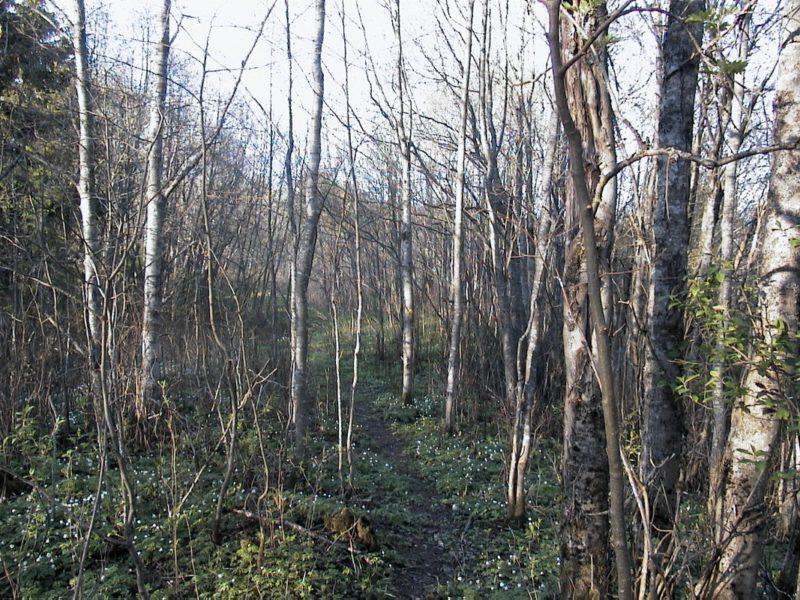 Dette er urskog.